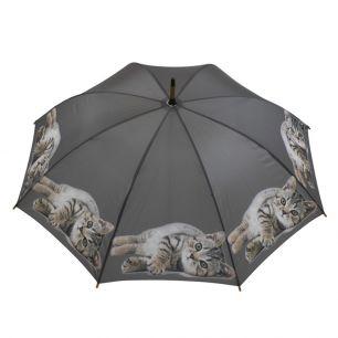 Paraplu tabby liggend
