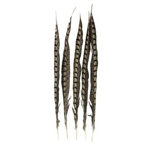 Veer fazant lady amherst 50cm (5st) *