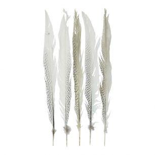 Veer fazant zilver 50cm (5st.)*