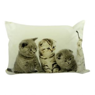 Canvas kussen kittens britse korthaar 4 35x50cm