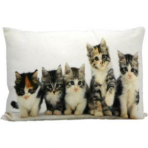 Canvas kussen kittens 35x50cm