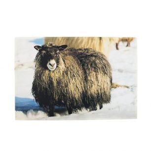 *deurmat sneeuw ijslands schaap*